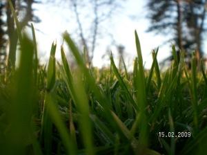 mai avem nevoie si de iarba
